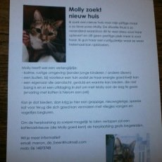 Molly, poes,